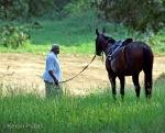 Horses off towork