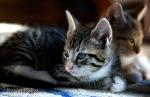 Kitties Sinclair