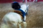 Lusitano in motion
