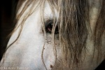 This stallion had such a noble look about him. I wanted to amplify the 'old world' feel.