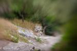 Steps alongside the Castle Wall,Obidos