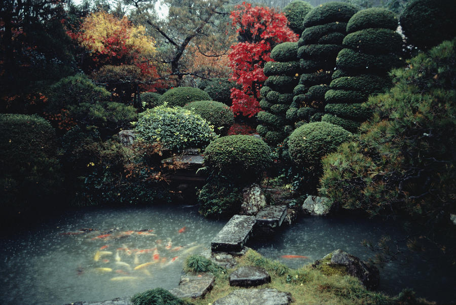 Great interviews sam abell and david alan harvey keron for Koi pond japanese garden