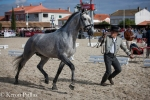Carlos Oliveira winning the 3-year-old Lusitano stallion class with 19 tough competitors!