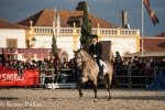 Pedro on 4 year-old Lusitano stallion
