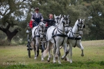 A Four In Hand Team among the cork oaks