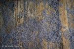 lavender floor