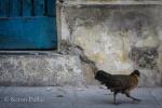 A citizen of Havana.